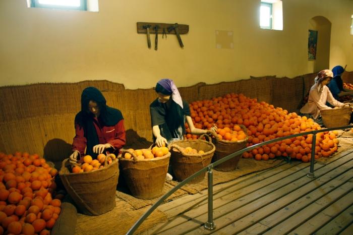 sorting oranges  col adj.jpg